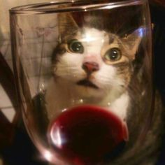 Fill my glass right meow!