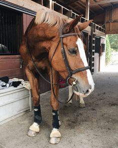 Cute Horses, Pretty Horses, Horse Love, Beautiful Horses, Animals Beautiful, Horse Photos, Horse Pictures, Cute Baby Animals, Animals And Pets