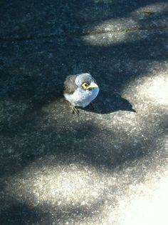Baby bird in Brisbane