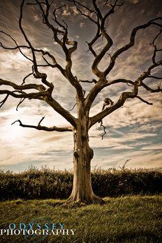Dead Tree Tattoo, Tattoo Son, Bare Tree, Old Trees, Unique Trees, Fantasy Paintings, Tree Photography, Winter Trees, Tree Art
