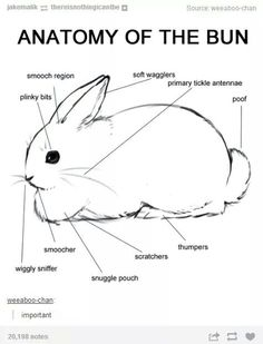 Bun anatomy