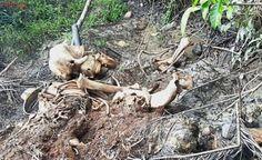 Traficantes e caçadores usam tecnologia e mídias sociais para capturar animais