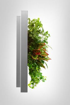 Side view of a LivePicture, after the plants have had a chance to grow Vertical Garden Design, Live Picture, Office Plants, Old Frames, Types Of Plants, Indoor Plants, House Plants, Planters, Side View