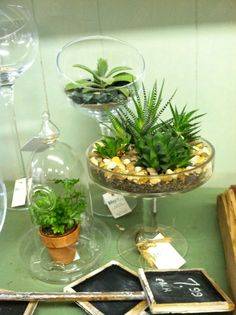 Succulents are a perfect houseplant. Easy to care for.  Atlanta florist   Atlanta house plants.