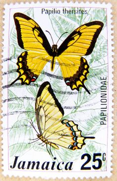 beautiful stamp Jamaica 25c butterfly timbre Papilio thersites papilionidae