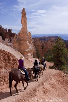 Random, I know. I have always wanted to go on the mule rides to tour the Grand Canyon.