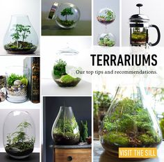 How To: Terrariums