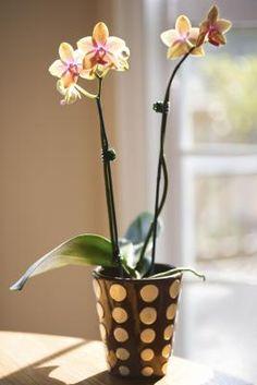 Receta casera para fertilizante de orquídeas | eHow en Español