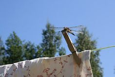 One of the guests at Strandhagen B&B. B & B, Bed And Breakfast, Finland, Outdoor Decor, Summer, Summer Time