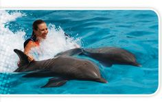 I always wanted to swim with the dolphins. I have touched a dolphin before.