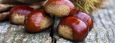 chestnuts vs horse chestnuts