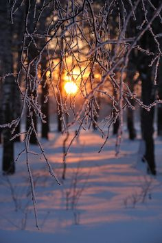 Sunset within snowy woods.