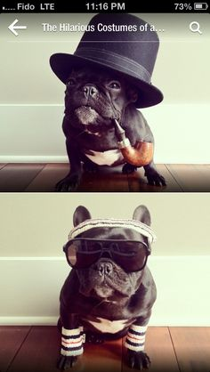 Funniest dog costumes...ever