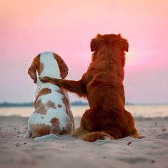 Dog's hugging
