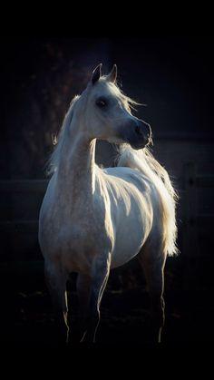 La beauté à l'état pur, ce cheval est né d'un poignée de sable et de vent