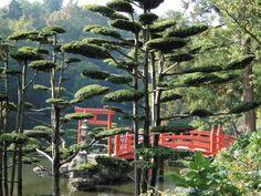 Parc Oriental de Maulevrier © D.Drouet / CDT Anjou Cloud Pruning, Asian Garden, Bonsai, Garden Design, Japanese Gardens, Outdoor Structures, Clouds, France, Stone