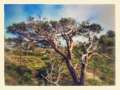Marked by wind and weather Taking Pictures, Weather, Nature, Weather Crafts, The Great Outdoors, Mother Nature, Scenery, Natural