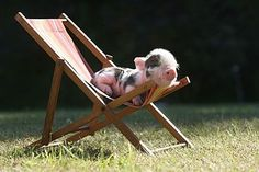 Cute Baby Pigs, Cute Baby Animals, Animals And Pets, Funny Animals, Farm Animals, Mini Piglets, Cute Piglets, Animal Pictures, Cute Pictures