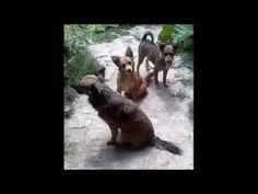 Sándor 2015 Wordpress, Animals, Pet Dogs, Animales, Animaux, Animal, Animais
