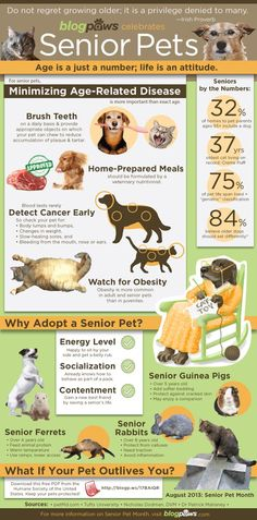 August is Senior Pet Month – Adopt a Senior Today http://www.poochandclaws.com