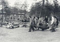 April 15, 1945: The Liberation of Bergen-Belsen