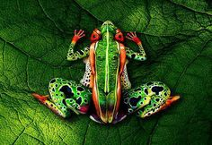 Painted bodies optical illusion art by Johannes Stotter (Hint: each hind leg is a crouching person)