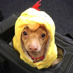 Why did the chicken go to the airport? Because he needed to fly to Atlanta for Easter. Tuna Dog, Social Media Stars, Dog Names, Dog Training, Teddy Bear, Puppies, Dogs, Cute, Animals