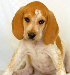 Redbone Coonhound Mix F 1 Year 31 Lbs Named Zena In Mobile Al Mobile County Animal Shelter