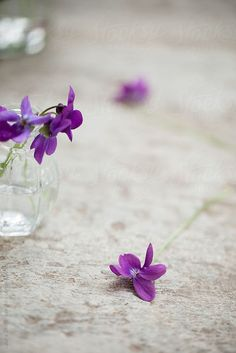 Springtime: wild violets bouquet in glass jar on stone pavement