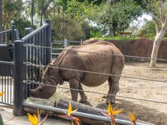 melastmohican posted a photo:  Indian rhinoceros (Rhinoceros unicornis) is a rhinoceros native to the Indian subcontinent.