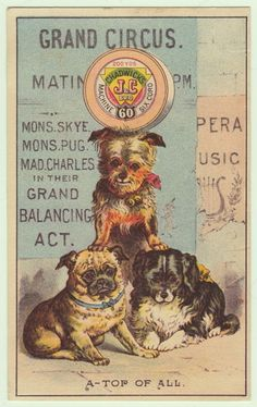 Chadwick's Sewing Thread Victorian Trade Card Circus Dog Dogs Pug Terrier NY