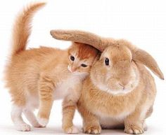 Best Friends Forever You Heard! This cat loves staying warm and protected by Ms Bunny's Ears