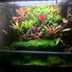 Paludarium, Vivarium, Frog Tank, Pet Frogs, Terrarium, Tanks, Aqua, Pets, Terrariums