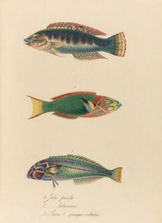 25+ Free Printable Vintage Aquatic Images | Remodelaholic | Bloglovin'