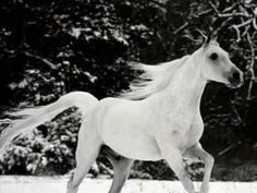 Enigma - Return To Innocence....  For the Love of Horses....  Beautiul shots of horses and the beautiful music gives me goosebumps