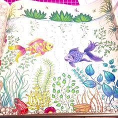 Peixes - jardim secreto