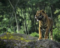 Tell KFC to stop trashing the rainforest and killing off tigers just to make food packaging!