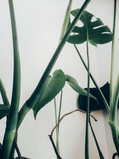 Sycamore Q&A: Janneke Luursema Indoor Garden, Indoor Plants, Cactus, Plants Are Friends, Green Nature, Green Life, Green Plants, Shades Of Green, Sycamore Street