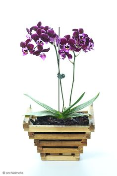 Wood basket for orchid Orchid Flower Arrangements, Orchid Planters, Orchid Supplies, Phalaenopsis Orchid Care, Hanging Orchid, Orchid Roots, Garden Planter Boxes, Strange Flowers, Wood Basket