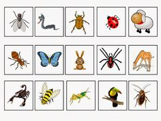 Bugs and Insects and Other Animals ΤΑΞΙΝΟΜΩ ΤΑ ΕΝΤΟΜΑ Grouchy Ladybug, Free Preschool, Bugs And Insects, Natural, Butterfly, Holiday Decor, Bees, Animals, Education