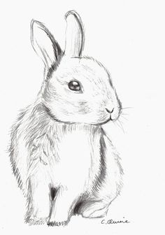 cute bunny drawing tumblr - Google Search More
