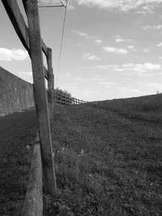 fence line #enixphotos