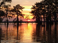 atchafalaya basin | The Atchafalaya Basin of Louisiana at Dusk.