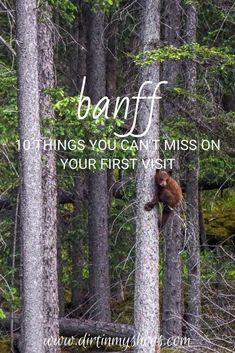 There are so many things to do in Banff National Park, but if this is your first road trip to the park it can be a little overwhelming. Don't worry, this list includes all the things you can't miss while on your vacation, plus a bunch of information to help you make your way around the park. Whether or not you like hiking and camping this list will make it easy to have a fun adventure. Fun Adventure, And So The Adventure Begins, Greatest Adventure, Canada National Parks, Banff National Park, Nature Activities, Amazing Adventures, Go Camping, Plan Your Trip
