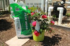 Double Knockout Roses and Peat Moss are the secret to a beautiful rose garden.