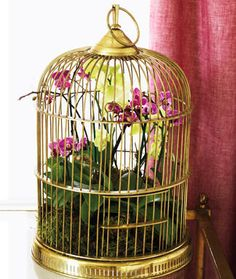 This sweet birdie bungalow will give your orchids both protection and personality. Even from kitties? Hmmm....