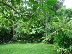 I like the back yard palms, and moisture loving flowers along edge of the grass.