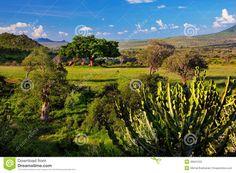 Grassland, Bush And Savanna Landscape. Tsavo West, Kenya, Africa Stock Photos…