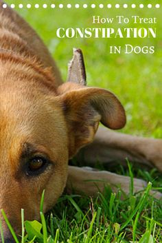 Do you know what to do if your dog gets constipated? Here are a few important things to keep in mind!