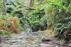 La Réunion : première randonnée à Trou de Fer - Les Gommettes de Melo